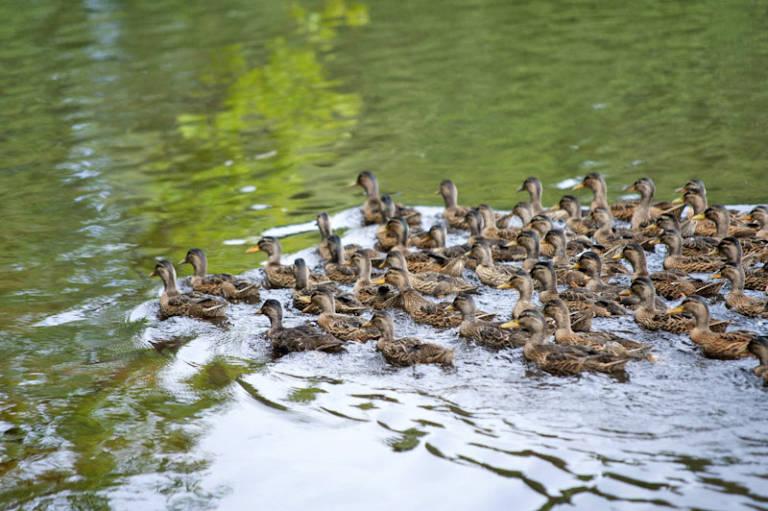Ptactvo na třeboňských rybnících