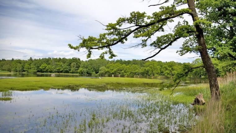 Okolní rybníky